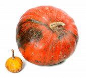 Big And Small Pumpkins