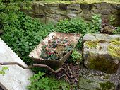 stock photo of wheelbarrow  - Wheelbarrow in an overgrown garden surrounded by an old wall