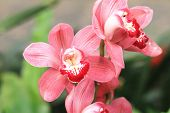 picture of unique landscape  - Phalaenopsis - JPG