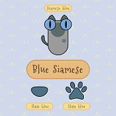 foto of siamese  - Infographic show detail of blue siamese cat eye color nose color and foot color - JPG