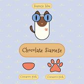 image of siamese  - Infographic show detail of chocolate siamese cat eye color nose color and foot color - JPG