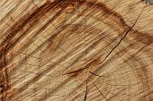 picture of cutting trees  - Wood texture of cut tree trunk close - JPG