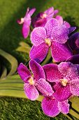 picture of orquidea  - Beautyful Orchid in the city on morning - JPG