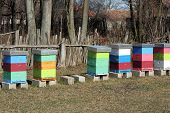 stock photo of honey bee hive  - Bee Hive boxes on the field - JPG