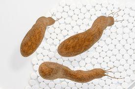 pic of mucosa  - Helicobacter pylori bacteria  - JPG