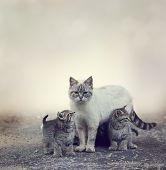 image of homeless  - Homeless Kittens  Beside Their Mother Cat - JPG