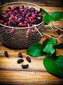 foto of mulberry  - the berries of an organic mulberry picked in a garden - JPG