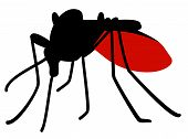 stock photo of malaria parasite  - Silhouette of biting mosquito full of blood - JPG