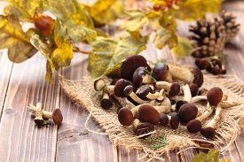 pic of crimini mushroom  - Edible mushrooms  - JPG