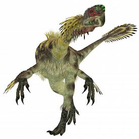 picture of omnivore  - Citipati was a omnivorous theropod dinosaur that lived in Mongolia during the Cretaceous Period - JPG
