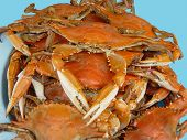 stock photo of blue crab  - A fine portion of select blue claw crabs boiled a la cajun spicy - JPG
