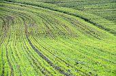 Billowy Field