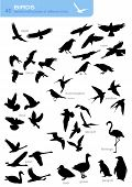 stock photo of flock seagulls  - collection of 40 silhouettes of different birds - JPG