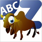 pic of zebu  - ABC Animals - JPG