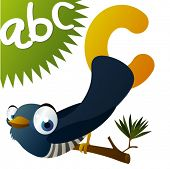 C is for Cuckoo