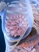 picture of mammary  - 3d rendered illustration of a female anatomy with mammary gland - JPG