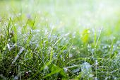 Morning Dew In The Woods On The Grass. Morning Freshness In The Field And On Meadows. Summer Morning poster