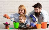 Family Plant Flowers In Pot. Child With Parents Cares For Plants Together. Little Boy With Mother, F poster