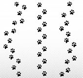 Paw Dog, Puppy, Cat Vector Print, Animal Trail Icon Set On Transparent Background. poster