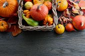 Wicker Basket With Colorful Pumpkins And Gourds For Halloween And Thanksgiving, Holiday Decoration poster
