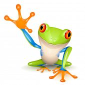 picture of orange frog  - Little tree frog on white background - JPG