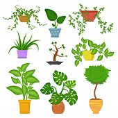 Decorative Houseplants In Pots Set Isolated On White Backgrund. Decorative Indoor Plants. Green Plan poster