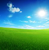 field of green grass and sun blue sky