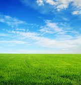 field of green grass and blue cloudy sky