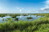 This Is A View Of The Wetlands At The Merritt Island National Wildlife Refuge. Range Of Habitats, Fr poster