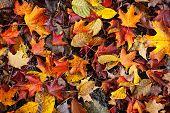 Постер, плакат: Осенью листья фон