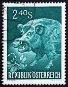 Postage stamp Austria 1959 Wild Boar, Sus Scrofa