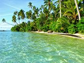 foto of samoa  - Tropical beach with palm trees in Samoa - JPG