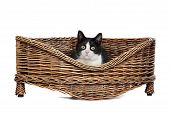 Cat In Wicker Bed