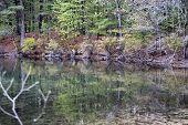 Reflection In Walden Pond