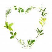 picture of hyssop  - Herb leaf selection forming a heart shape over white background - JPG