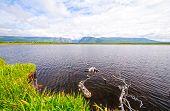 Remote Pond On A Sunny Day