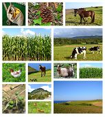 Collage of rural landscapes
