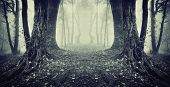 stock photo of eerie  - Eerie spooky scene of twin trees in a dark forest with fog on halloween - JPG
