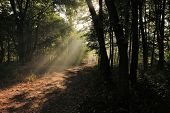 Sunlight rays in a forest
