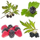 Collection set of Blackberries ( dewberries), raspberries isolated on white background
