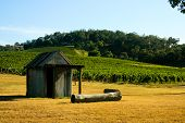 Shack In A Vineyard