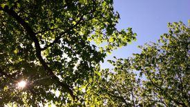 picture of nic  - A snapshot taken under the trees after a pic - JPG