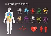 pic of intestines  - Human body with inner organs and icons vector illustration - JPG