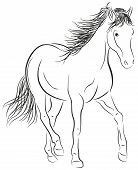 Calligraphic Horse - Illustration
