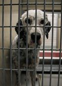 stock photo of stray dog  - a dog in a local shelter  - JPG