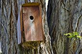 Overstuffed And Overflowing Birdhouse