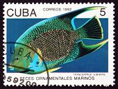 Postage Stamp Cuba 1992 Blue Angelfish, Marine Fish
