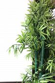 Artificial Bamboo Tree.