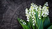 Lilly of the valley flowers on wooden texture. Romantic floral background.