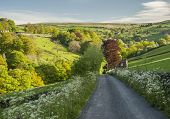 stock photo of hamlet  - Wild flowers along the edges of a country road which is leading down a lush green valley in summertime Yorkshire Dales - JPG